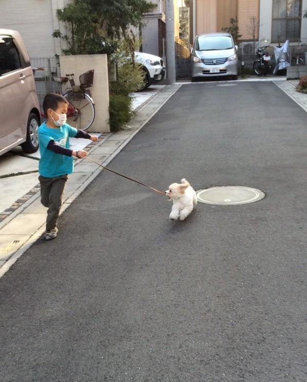 コッカプー子犬
